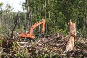 Jasa Konsultan AMDAL Pemanfaatan Hutan (HPH)